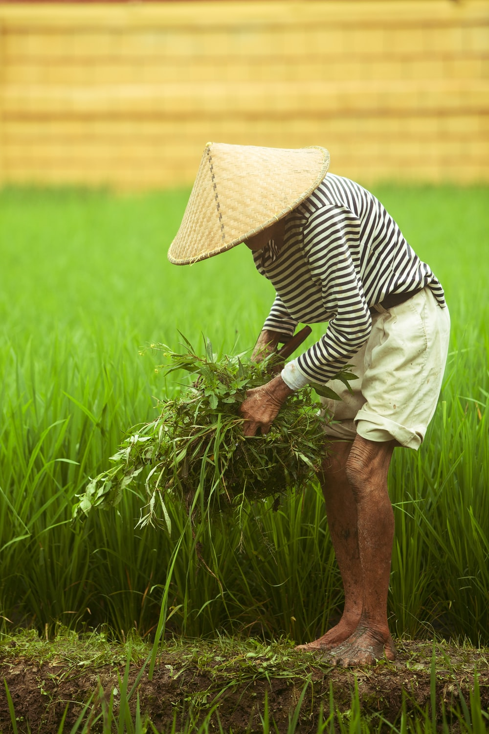 person stands while holding green grass