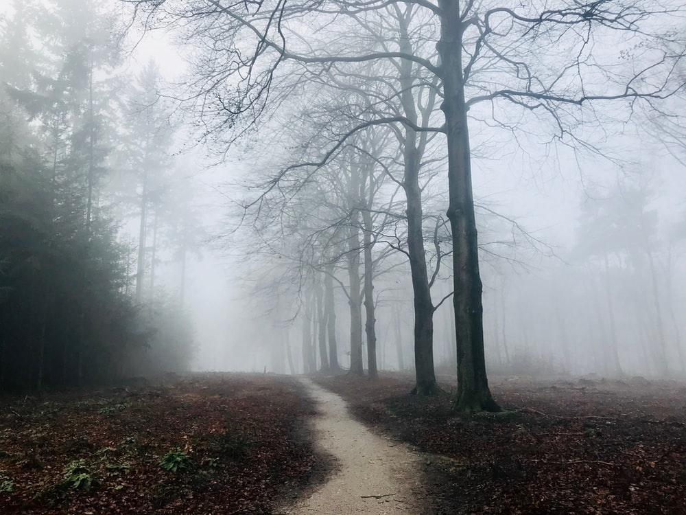 photography of bare trees with fogs