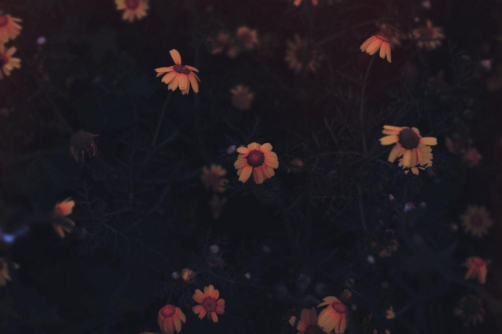 yellow flowerse