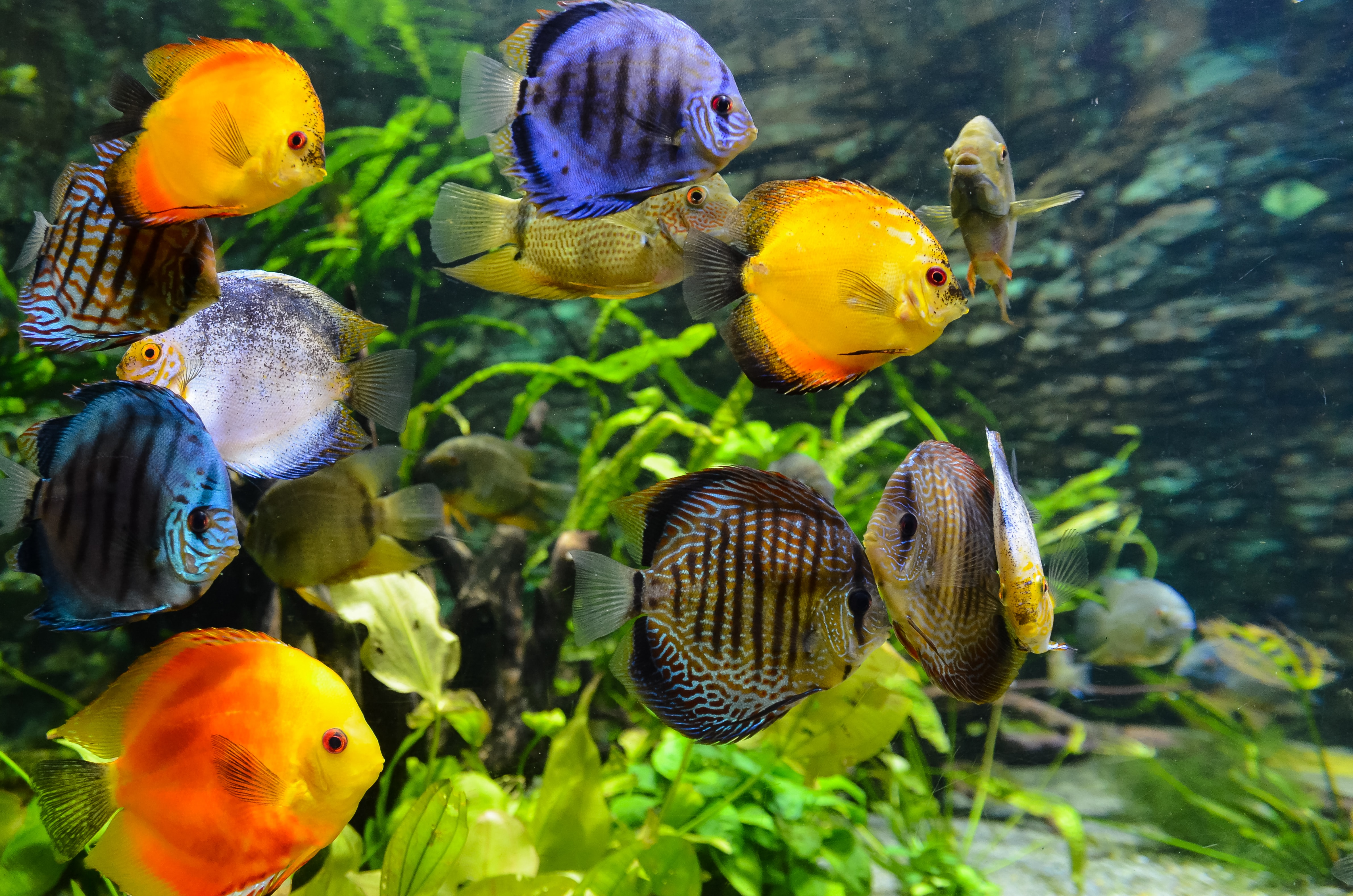 school of assorted-color fish