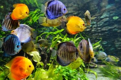 school of assorted-color fish aquarium teams background
