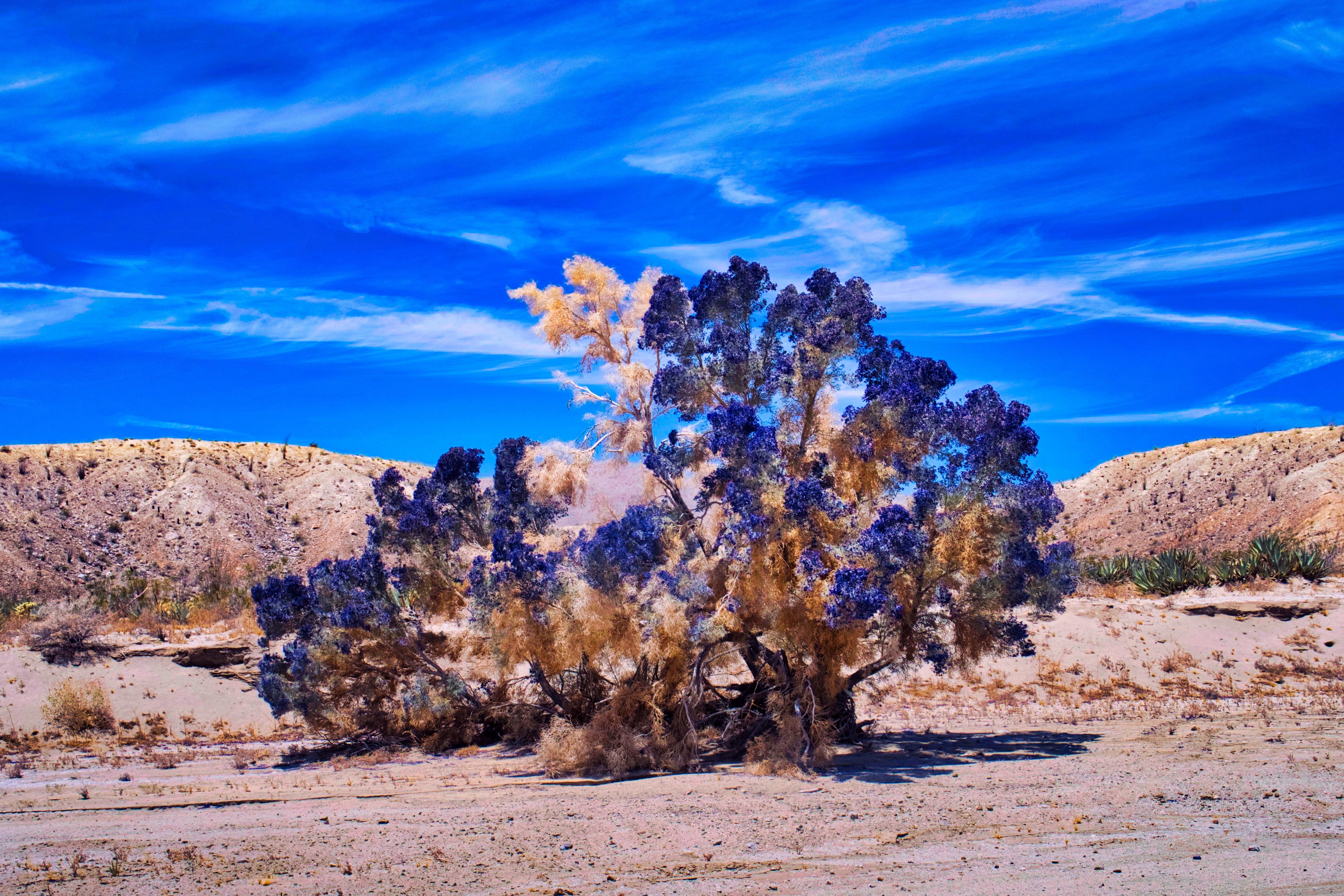 brown tree at desert during daytime