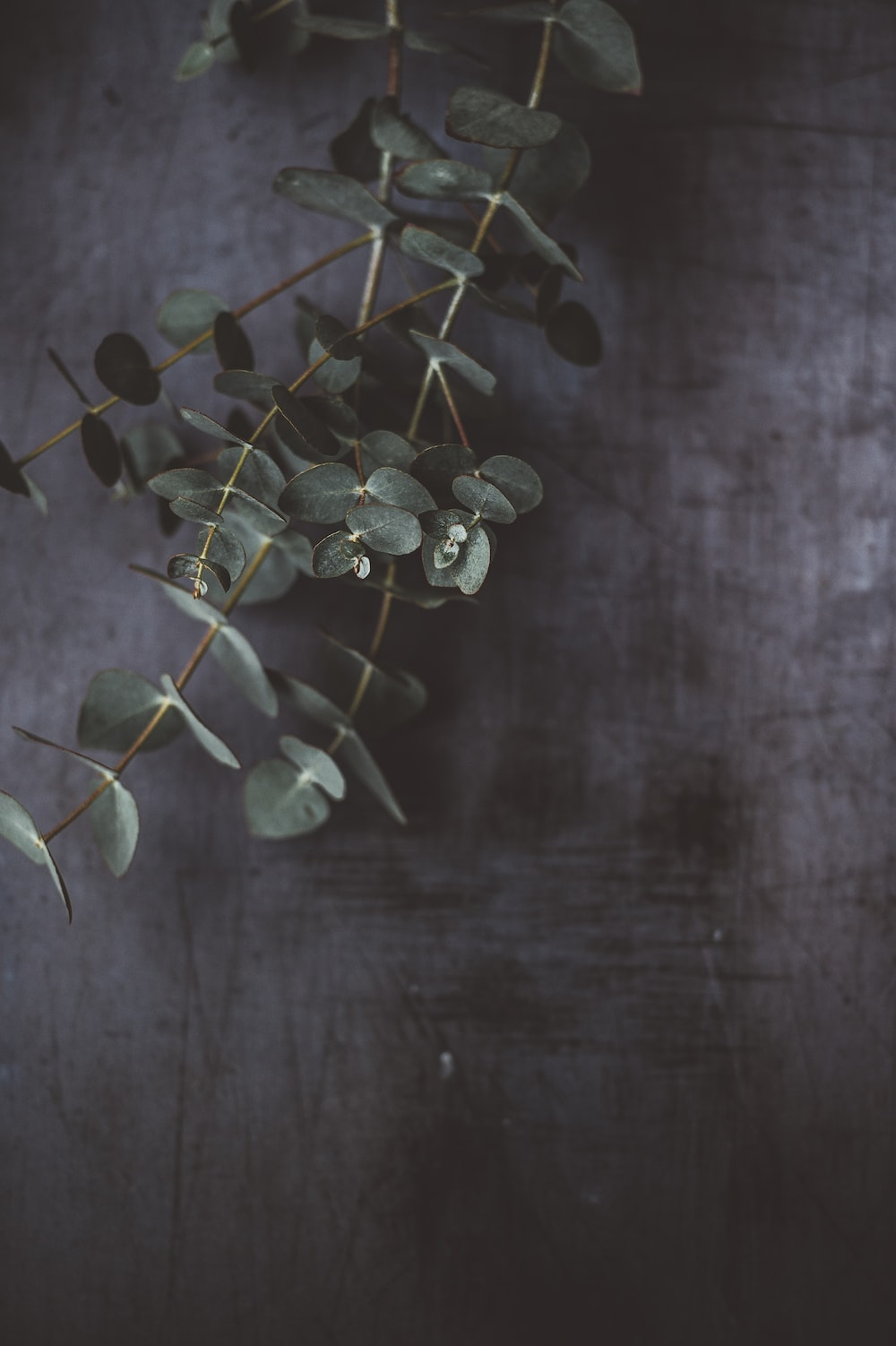 close-up photo of green plant near gray concrete wall