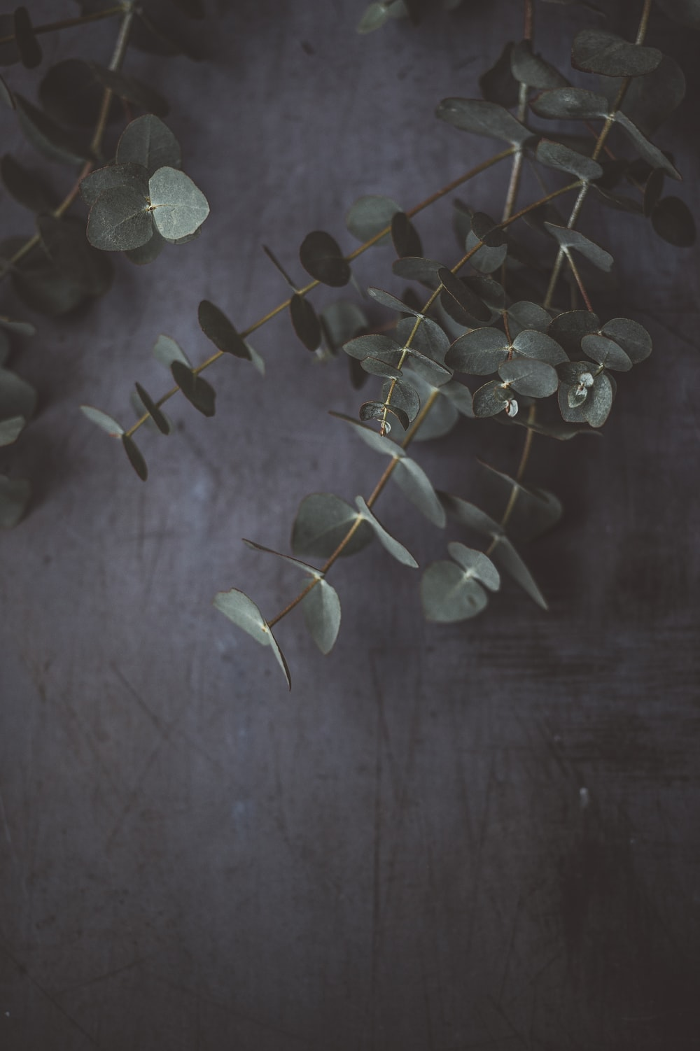 closeup photo of green leafed plant on gray surface