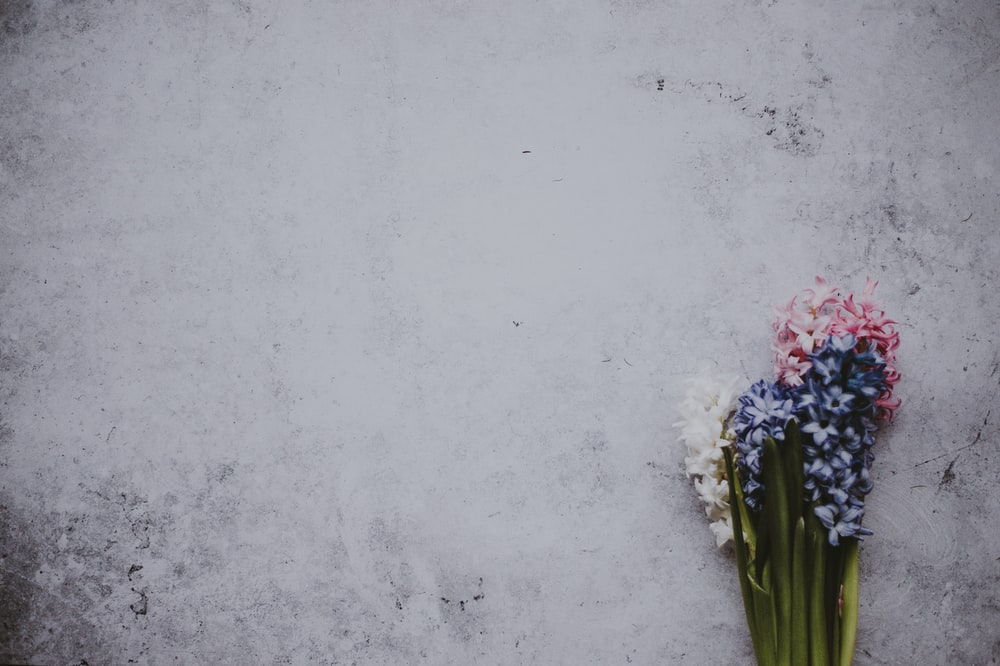 blue, white, and pink petaled flowers on gray surface