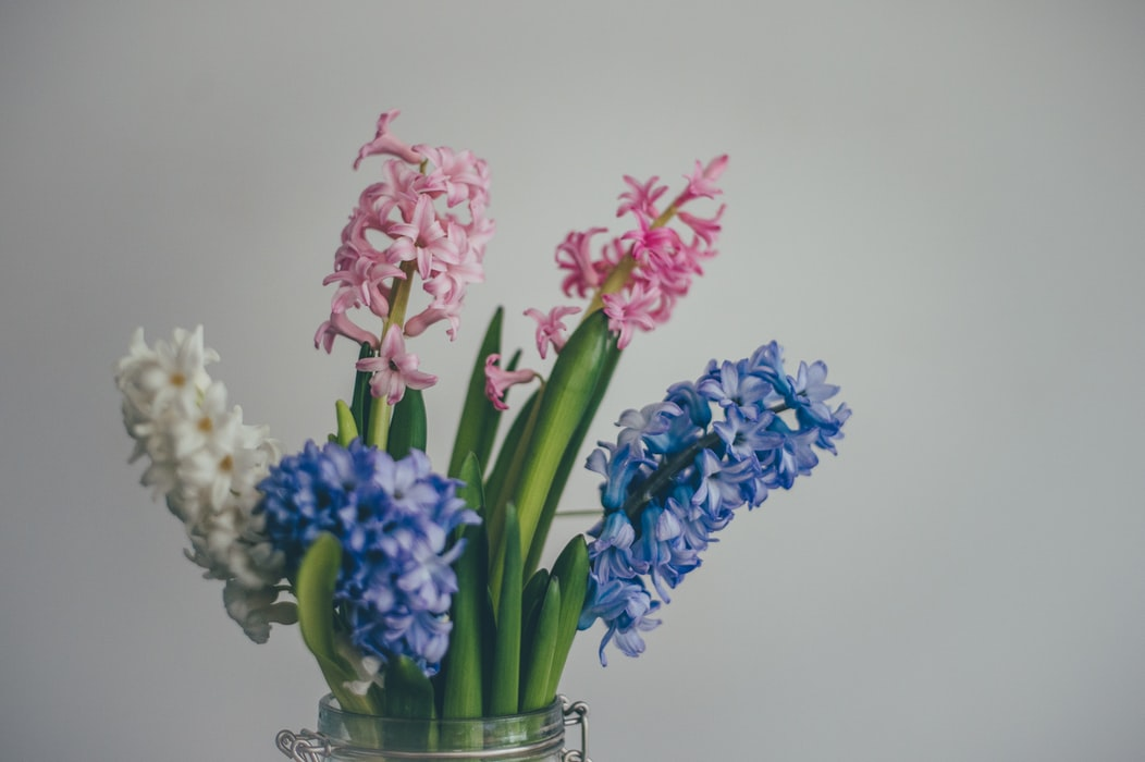Hyacinth | Fall Gardening With 9 Stunning Perennial Flowering Bulbs