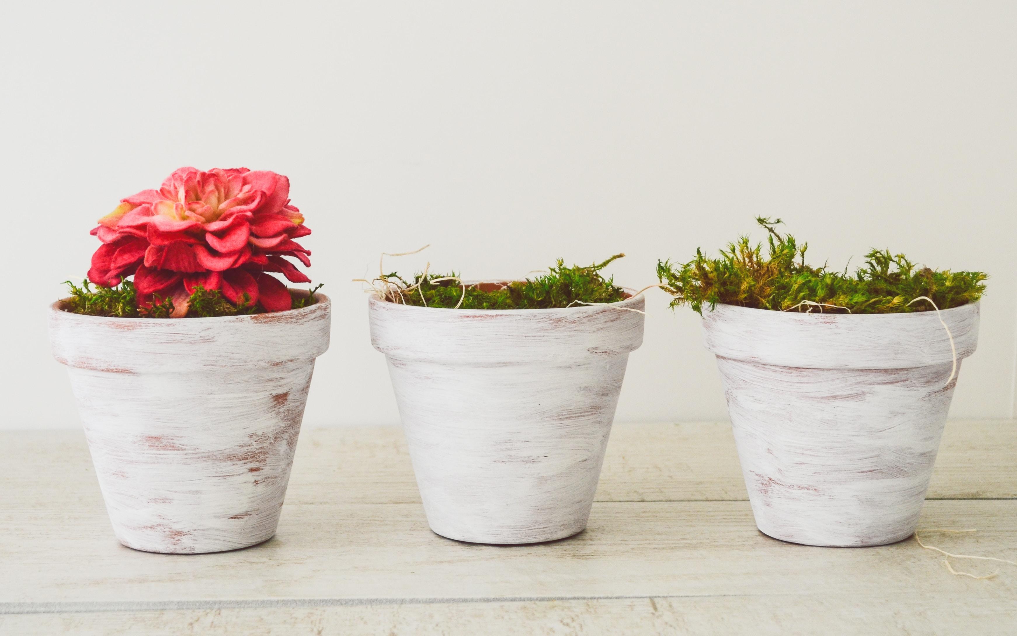 photo of white flowerpots