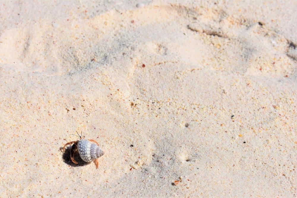 hermit crab walking on sand