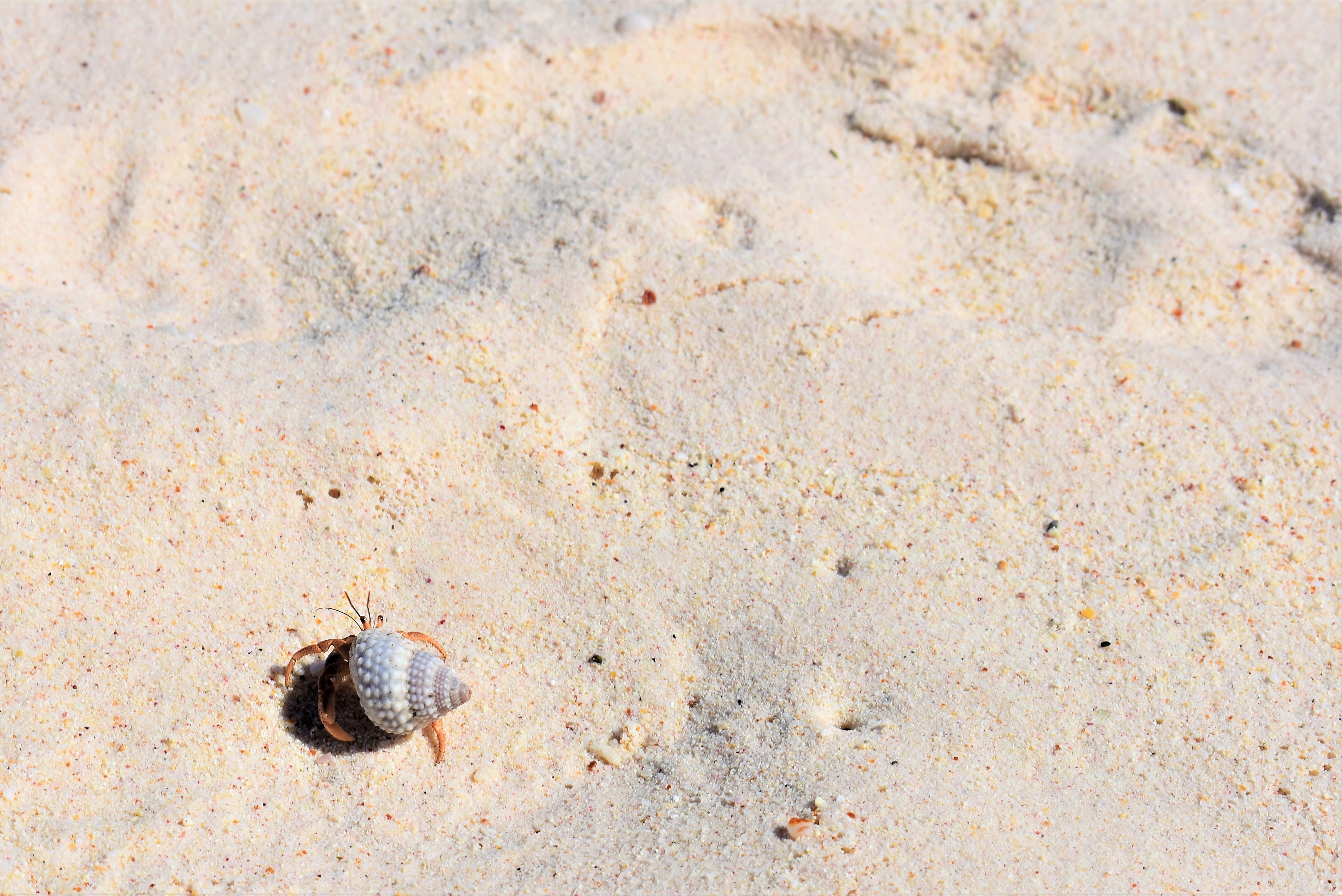 hermit crab walking on sand