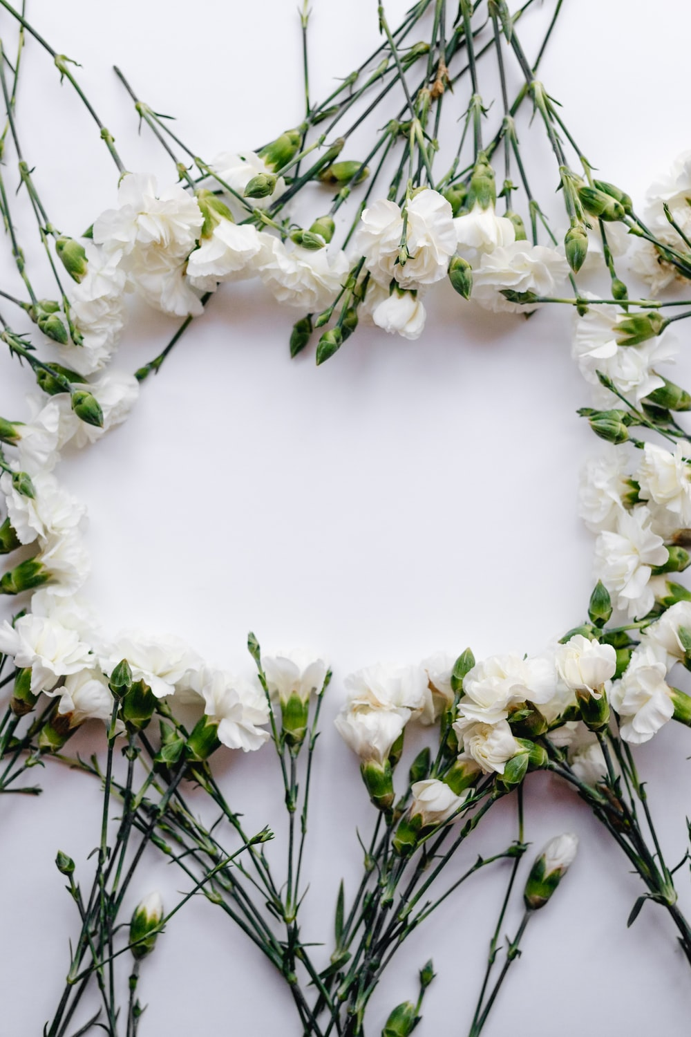 Flower Frame 30 Best Free Frame Flower White And Leaf Photos On