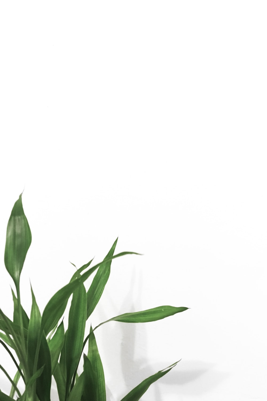 linear leaf plants near white wall