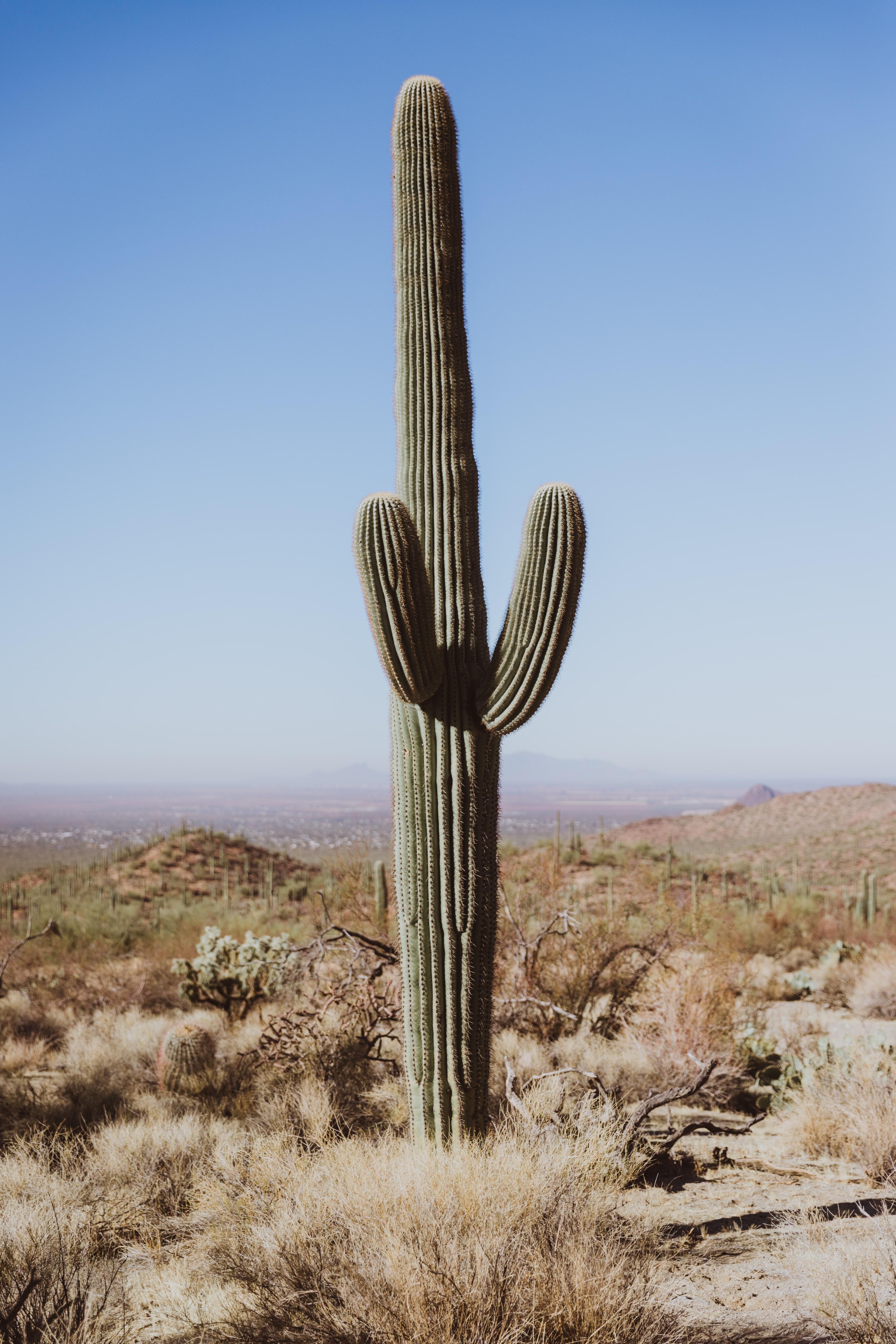 cactus plant closeup photography