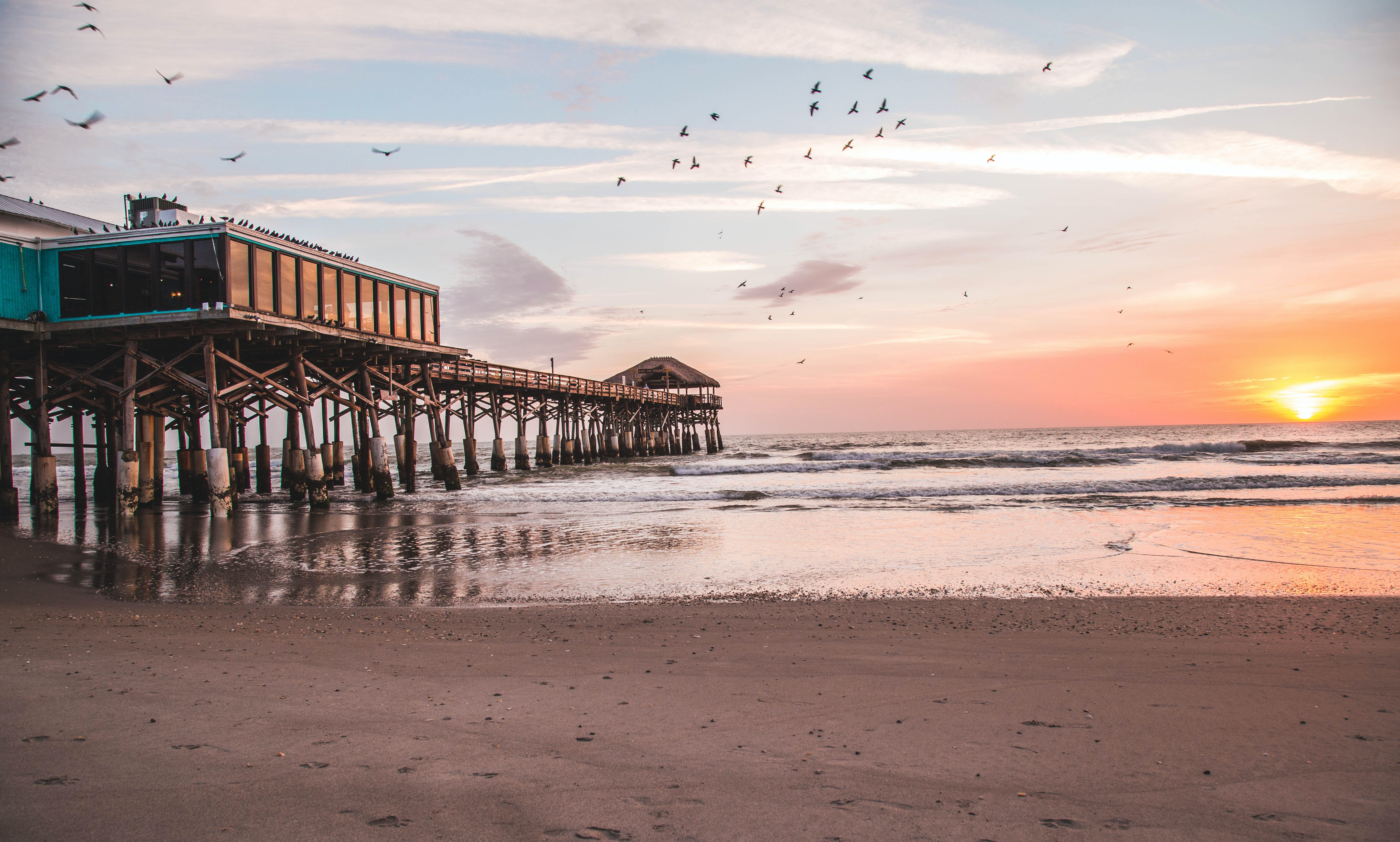 birds flying over brown wooden sea dock during sunset