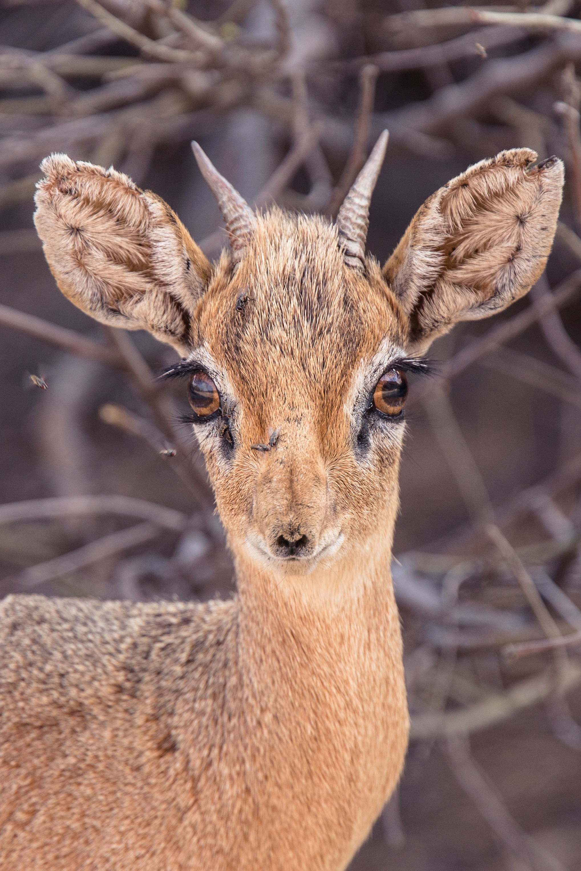 close up photo of brown deer