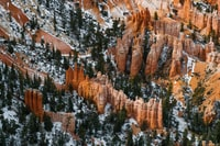 aerial photo of brown rock formations and trees