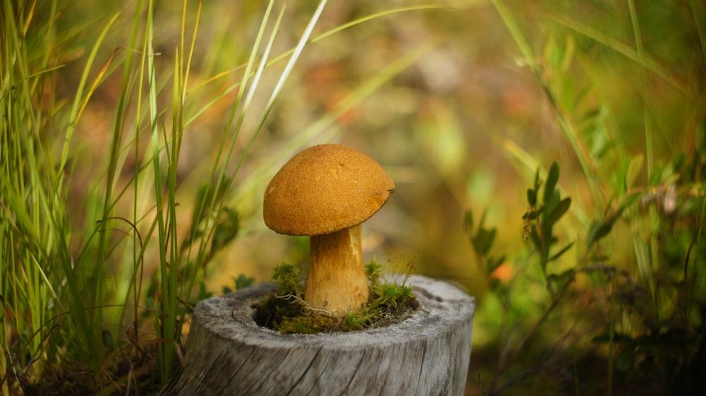 yellow mushroom macro photograpy