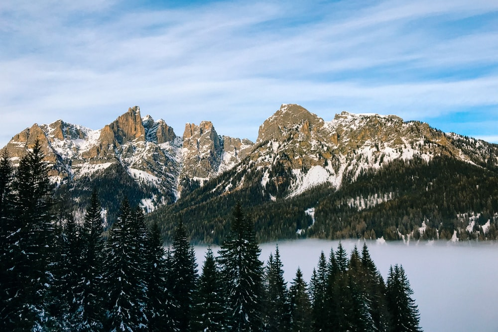 snowy mountains with pine trees surrounded with fog