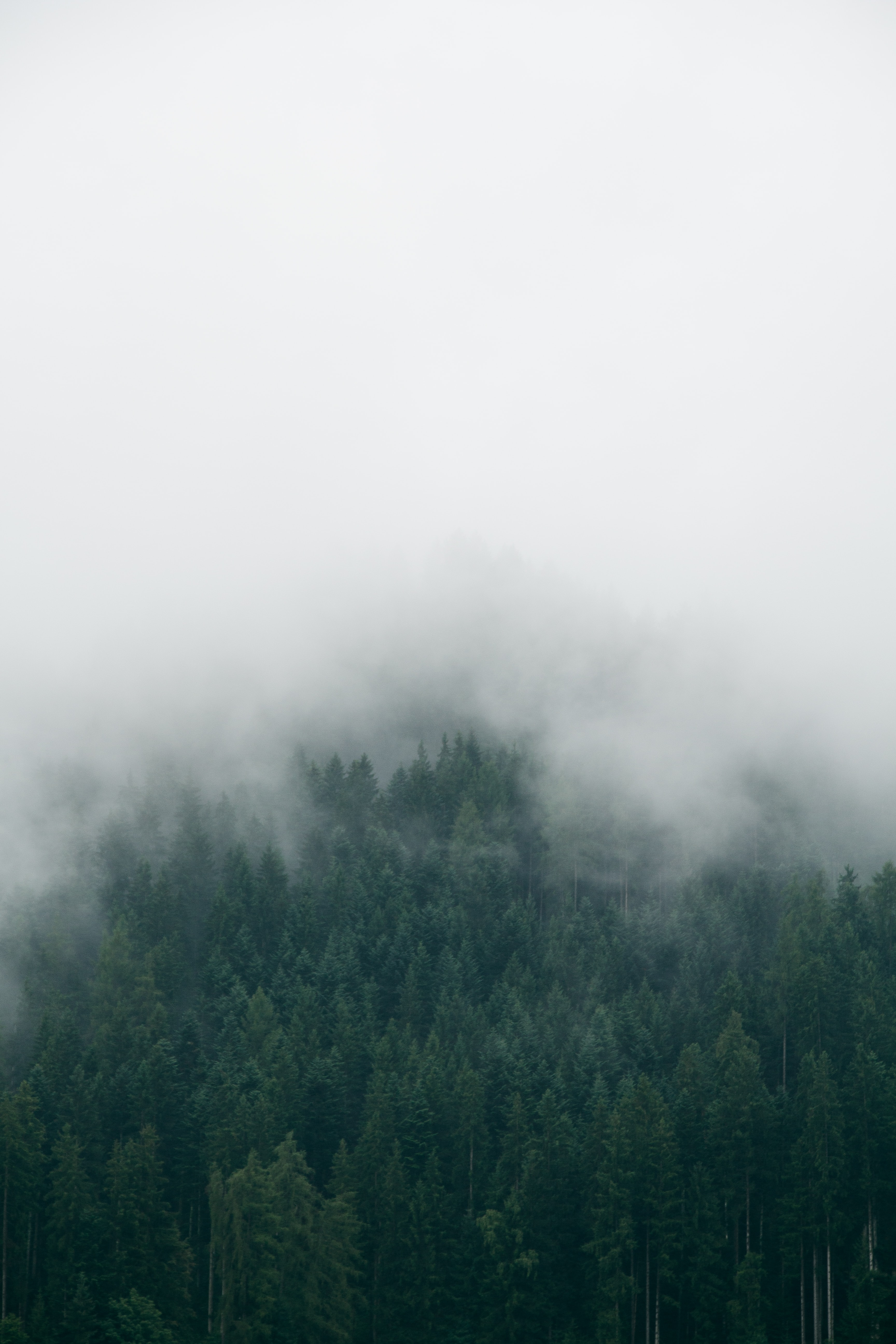 forest with foggy weather