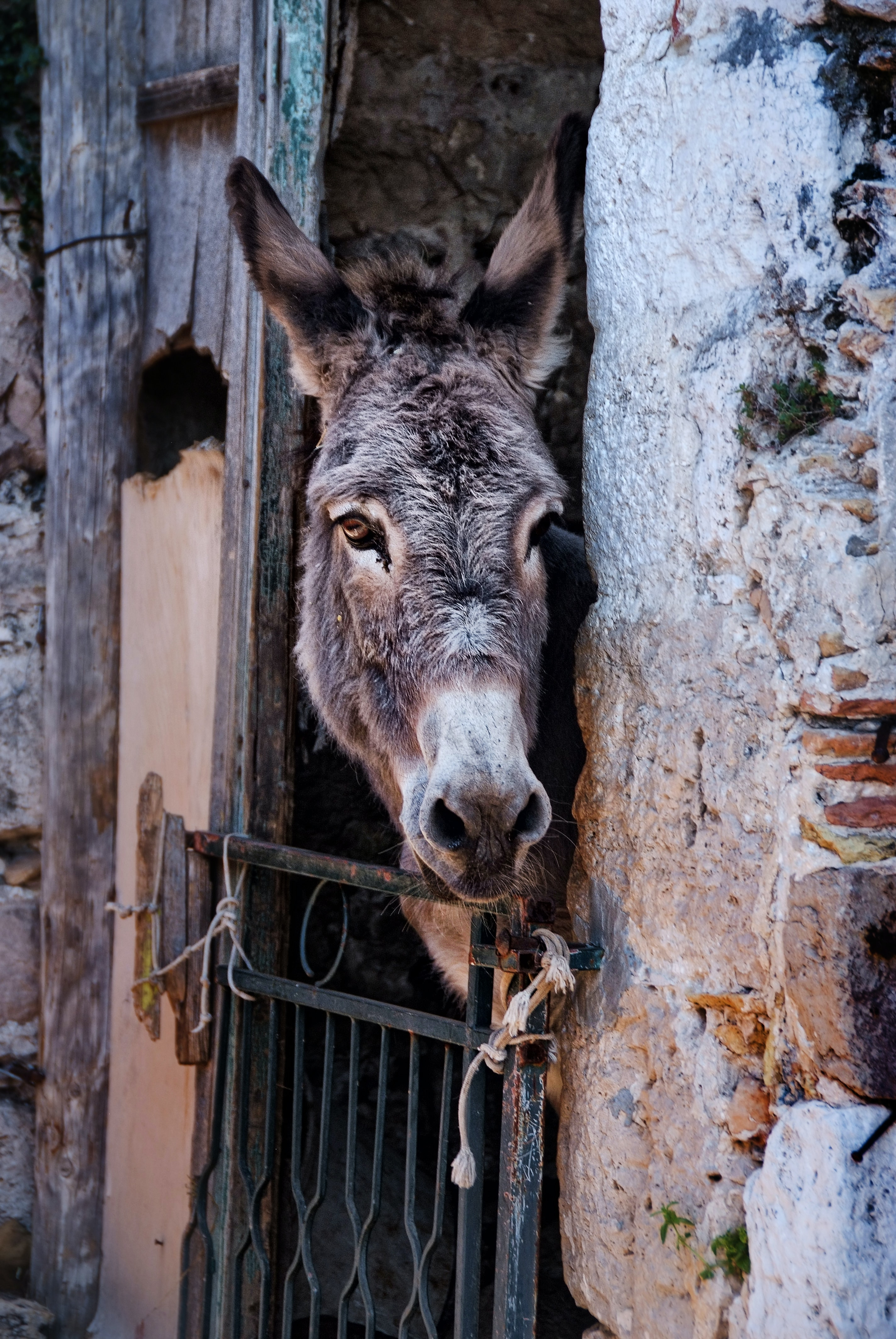 gray donkey inside gray concrete cage