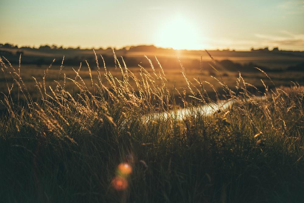 grass field golden hour photography