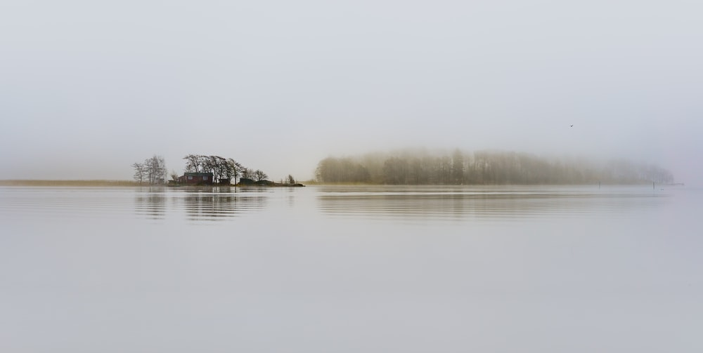 trees surrounded by body of water and fogs during daytime