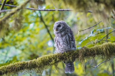 shallow focus photography of gray barn owl on sitting on tree branch