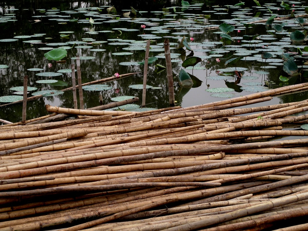 dried bamboo sticks floats on water full of waterlily pods