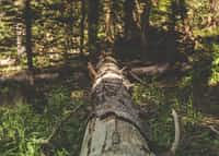Lumber tree stories