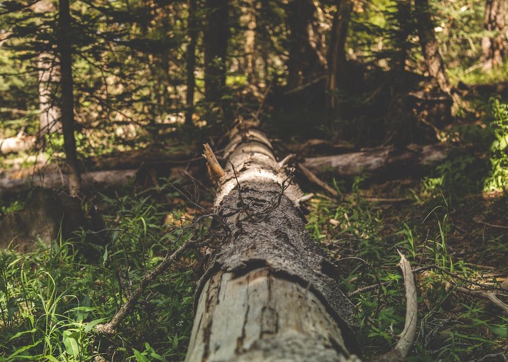 gray tree trunk on grassland