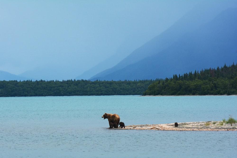 brown bear standing on seashore near sea under blue sky during daytime