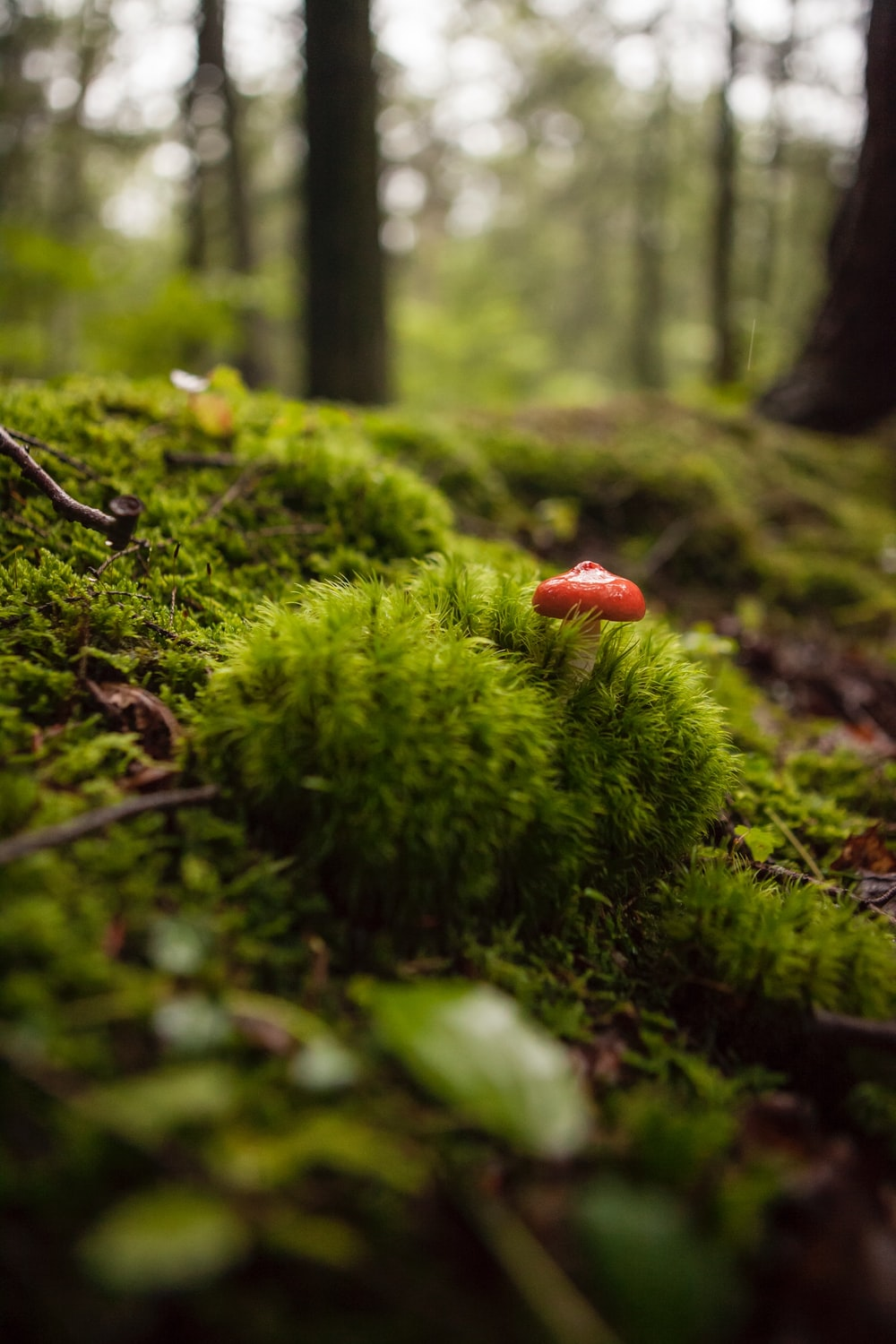 red mushroom growing on green grass at daytime