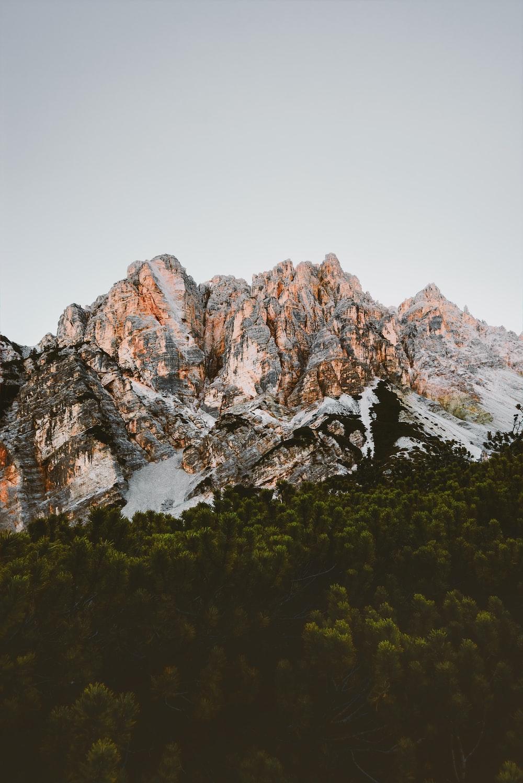 trees below mountain