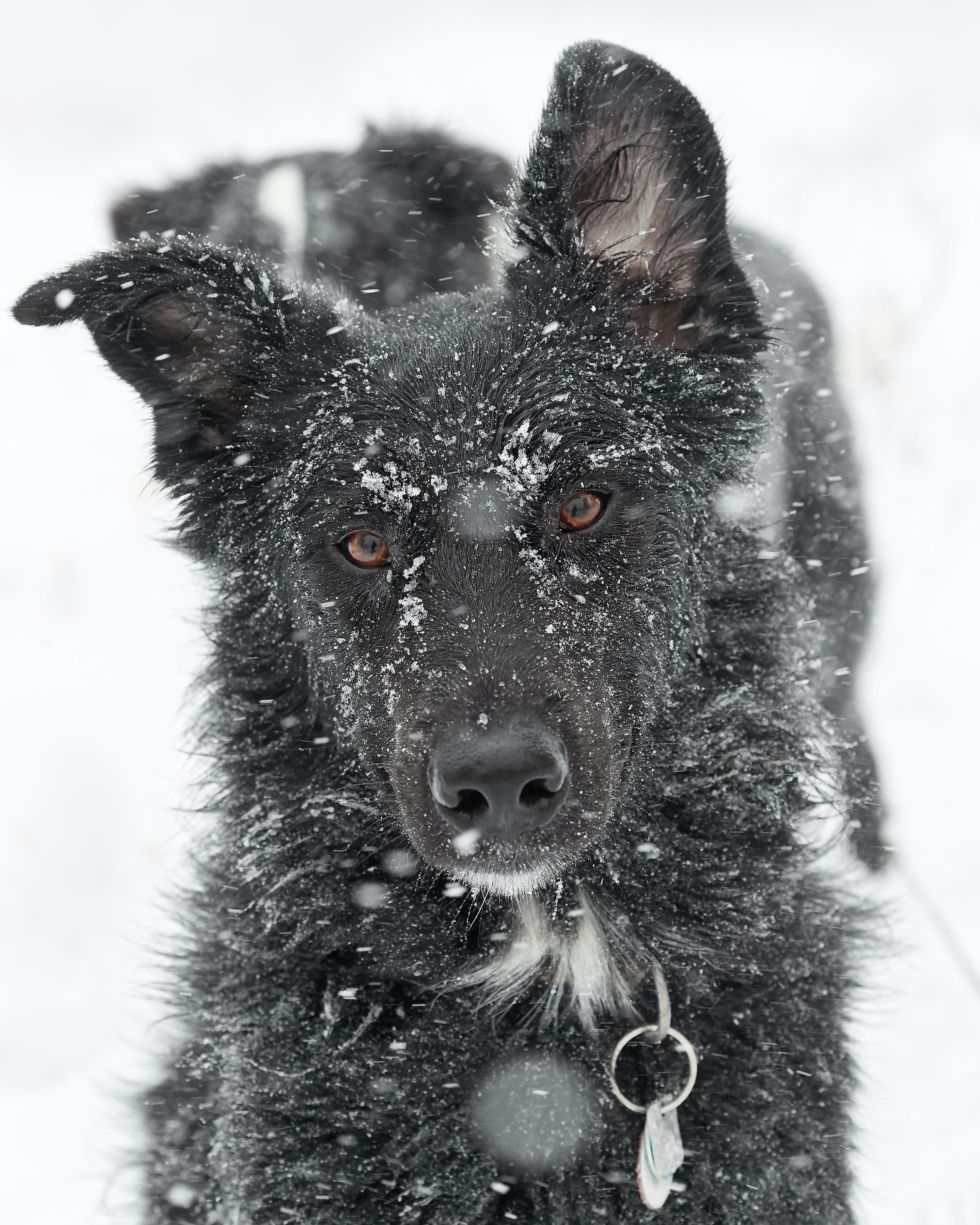 black dog in snow terrain during daytime