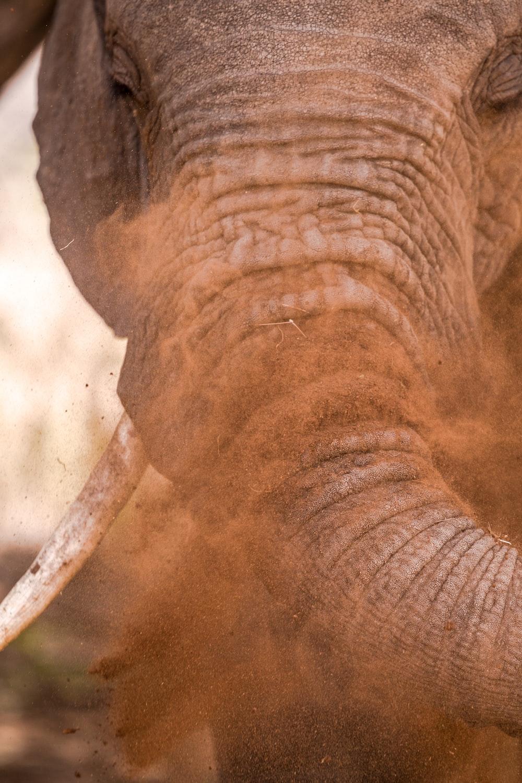 closeup photo of gray elephant