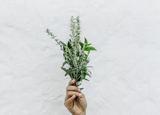 person holding green plants