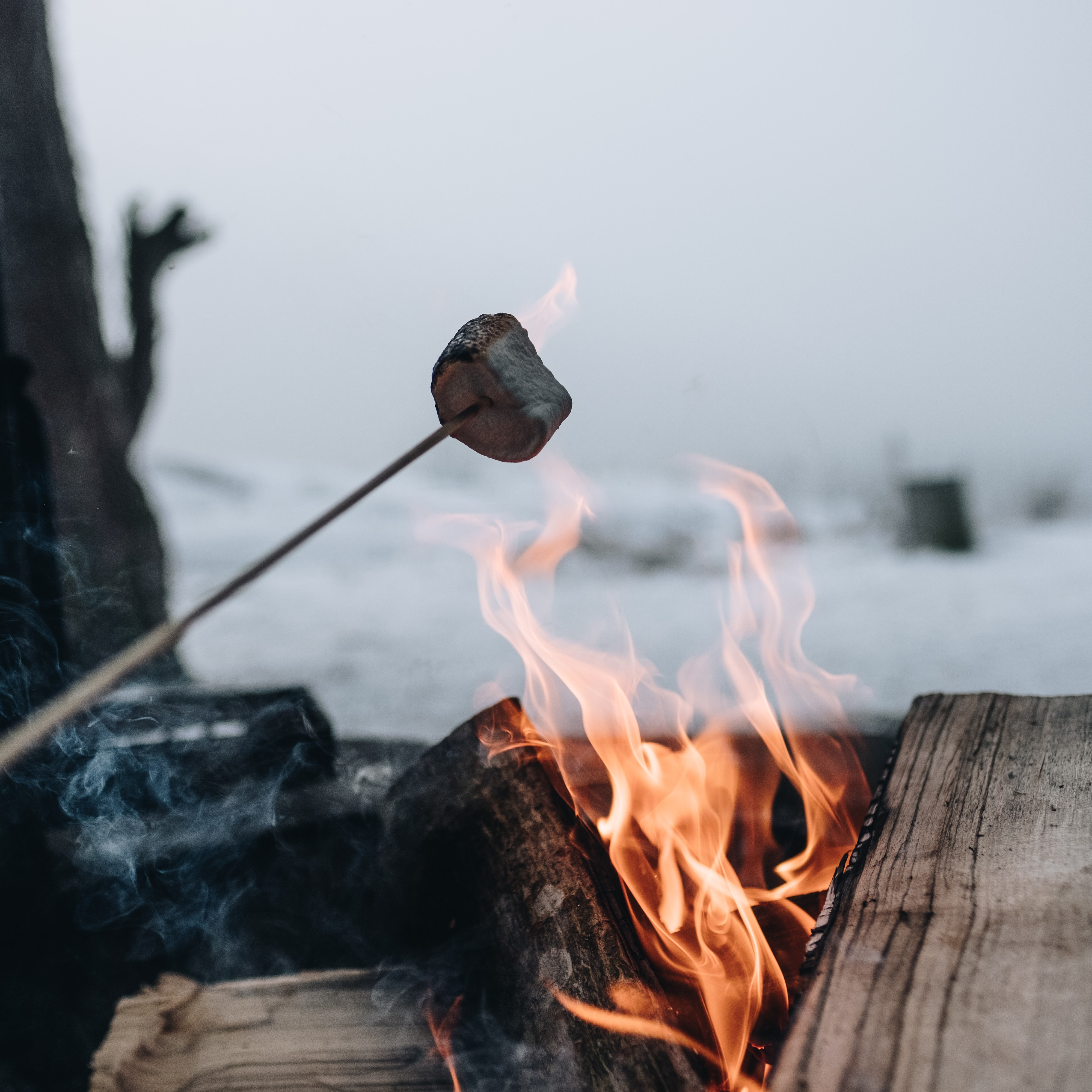 focus photo of grilled marshmallow on fire