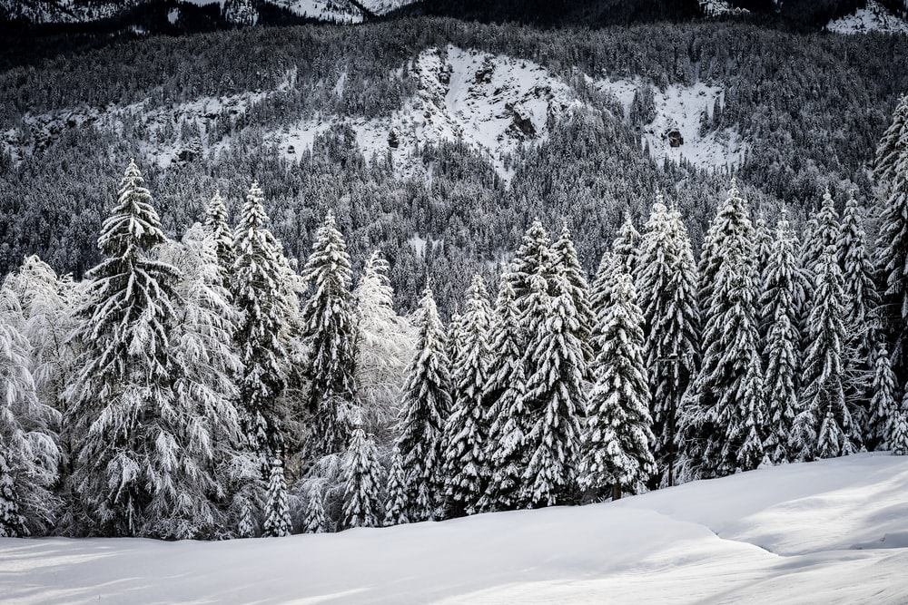 grayscale photo of snow covered trees during daytime