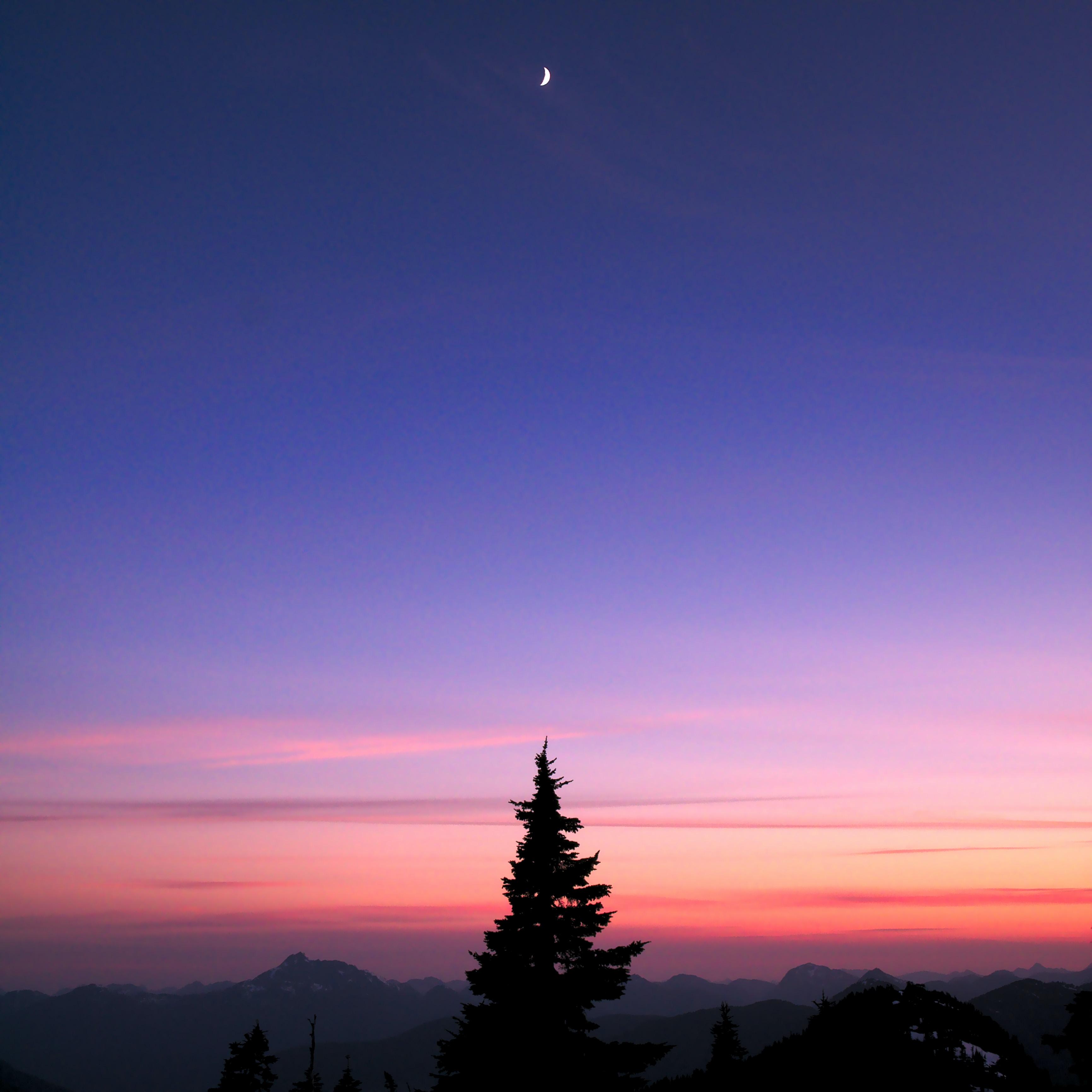 silhouette of tree near moon