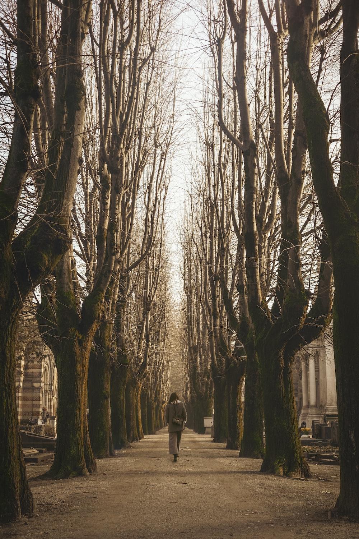 woman walking walking near bare trees during daytime