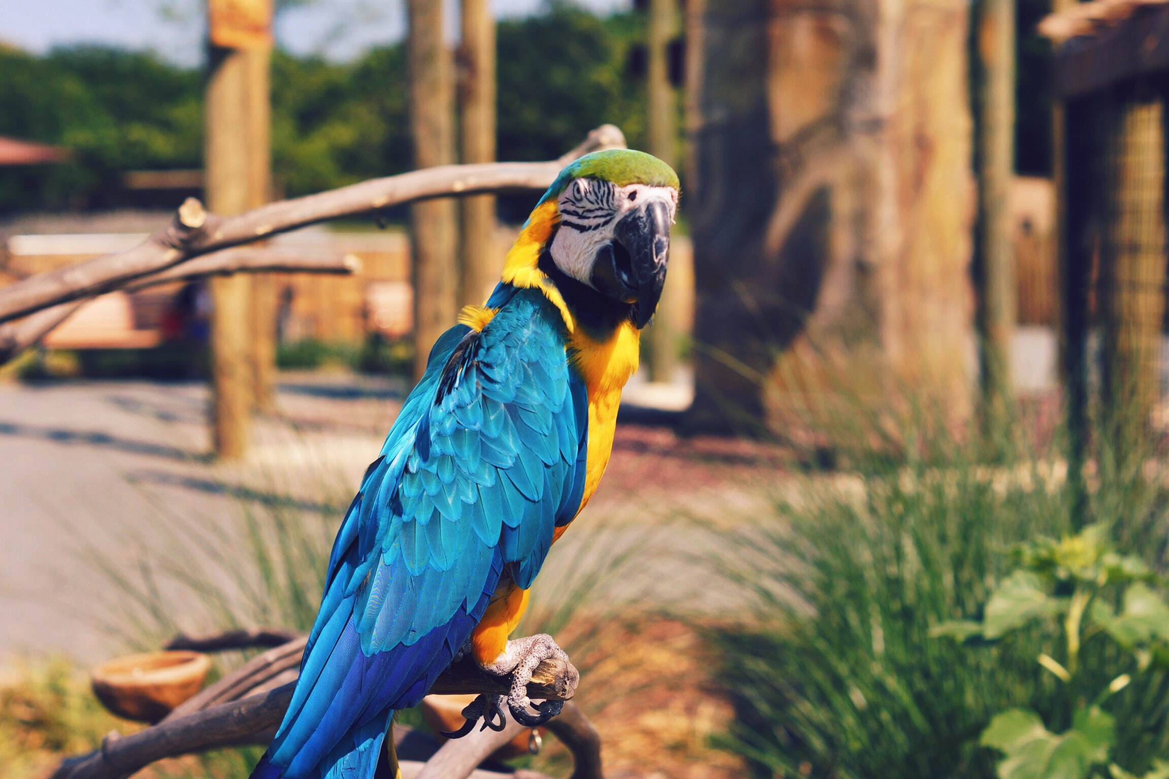 yellow and blue macaw on brown tree at daytime