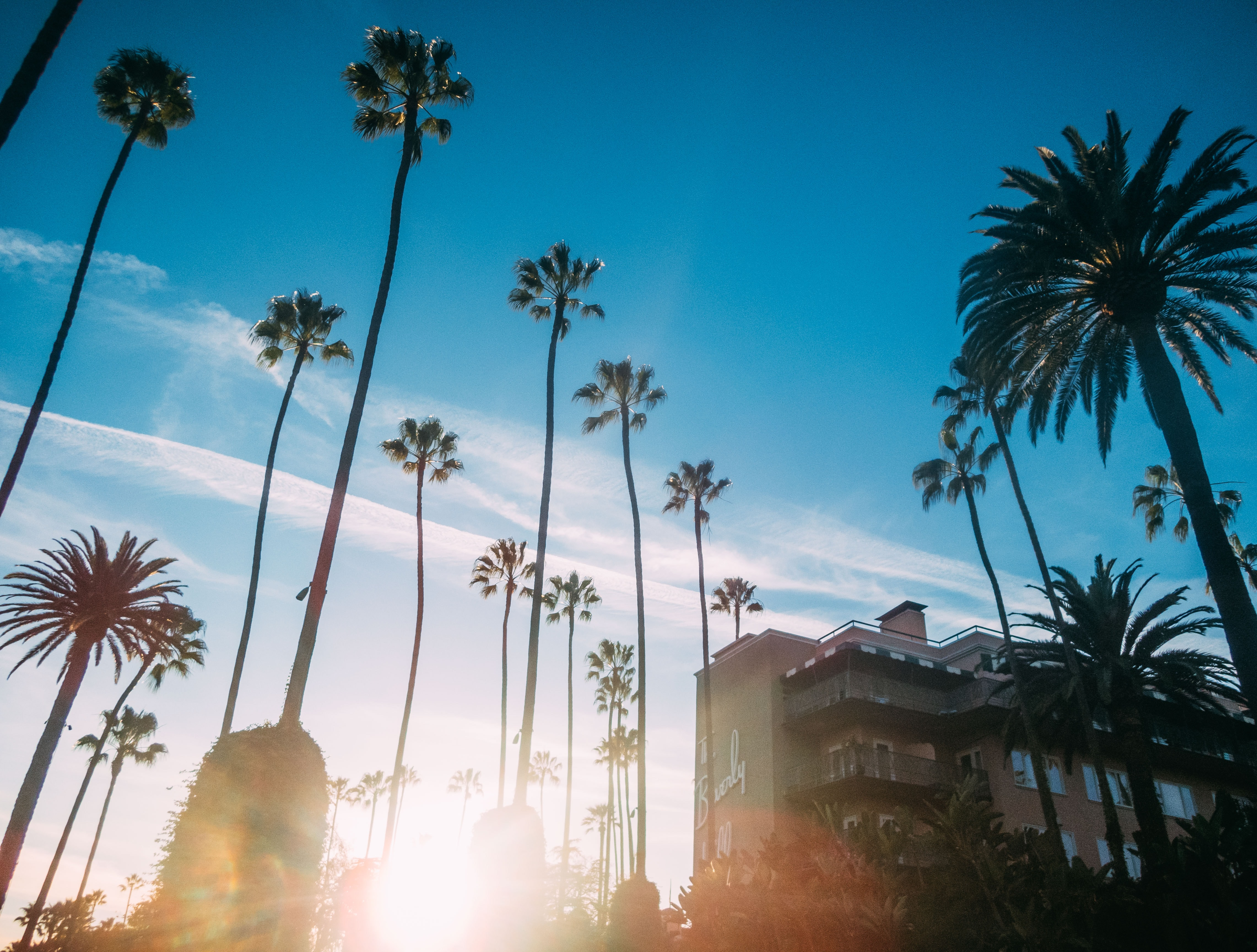 low-angle photo of palm trees