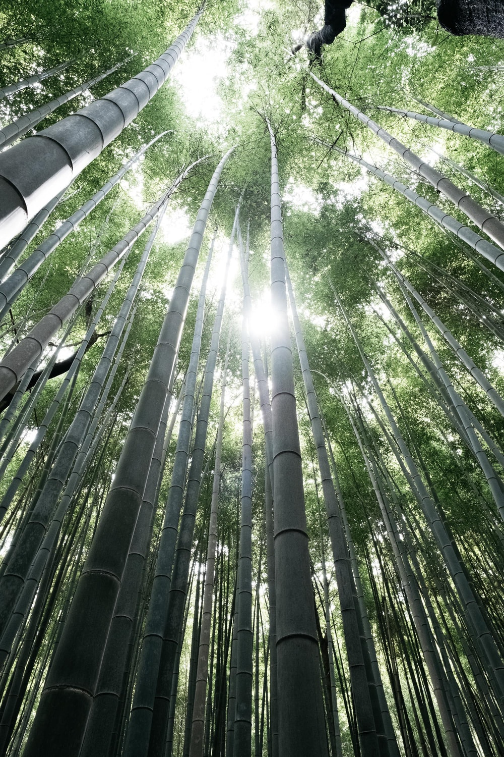 low angle photography of green bamboo trees