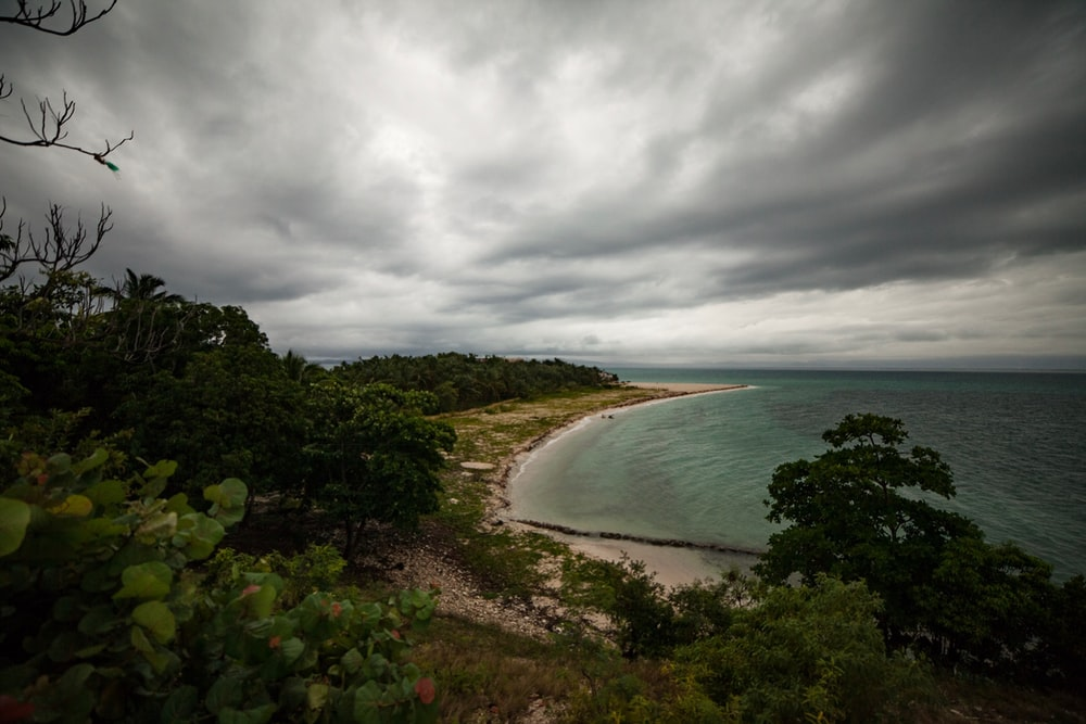 beach near forests under gray clouds during daytime
