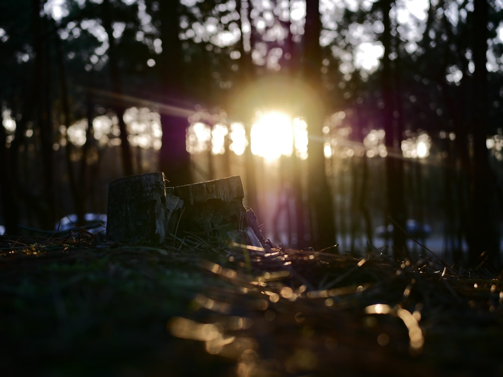selective focus of grass during sunrise