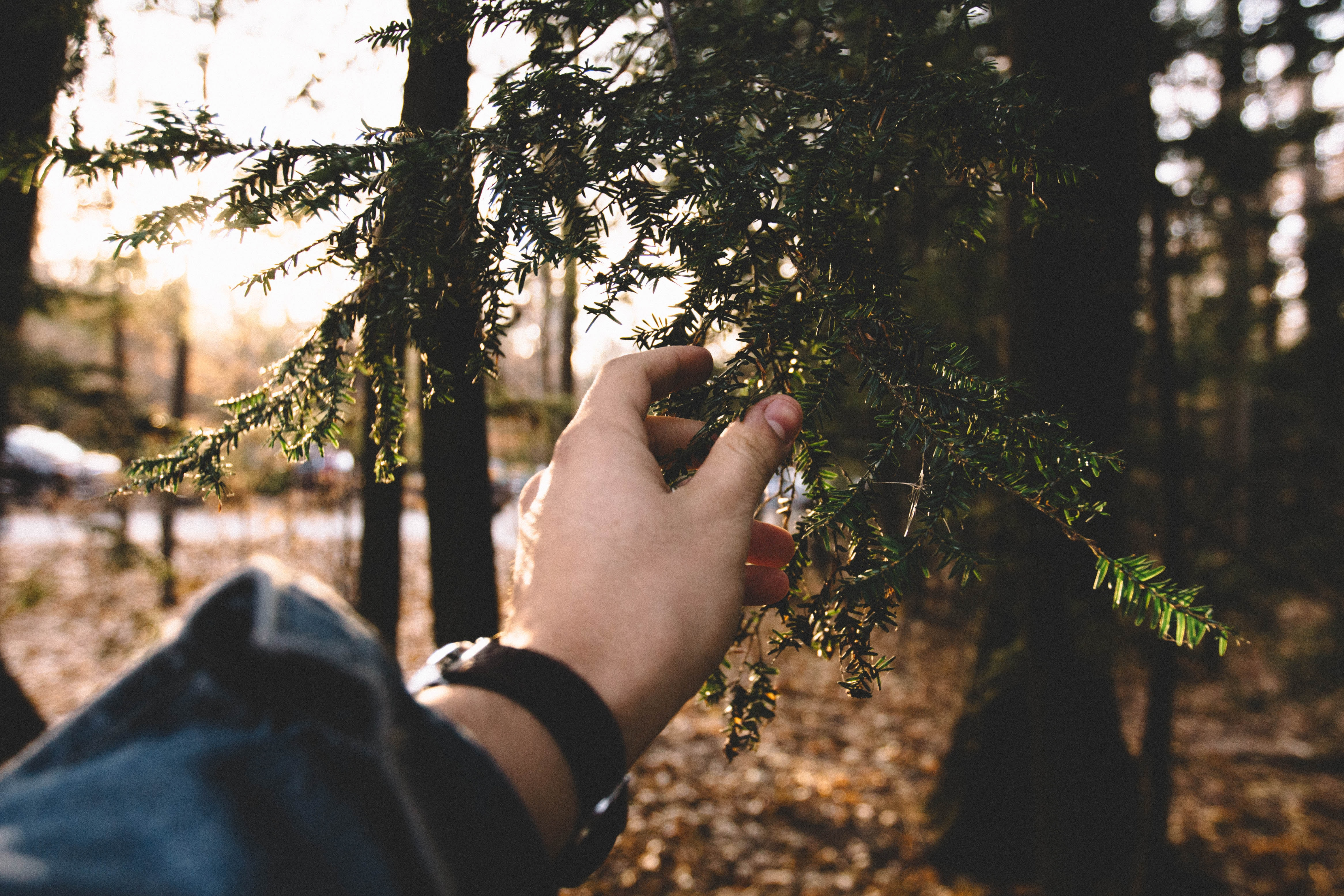 shallow focus photography of person holding green leaves
