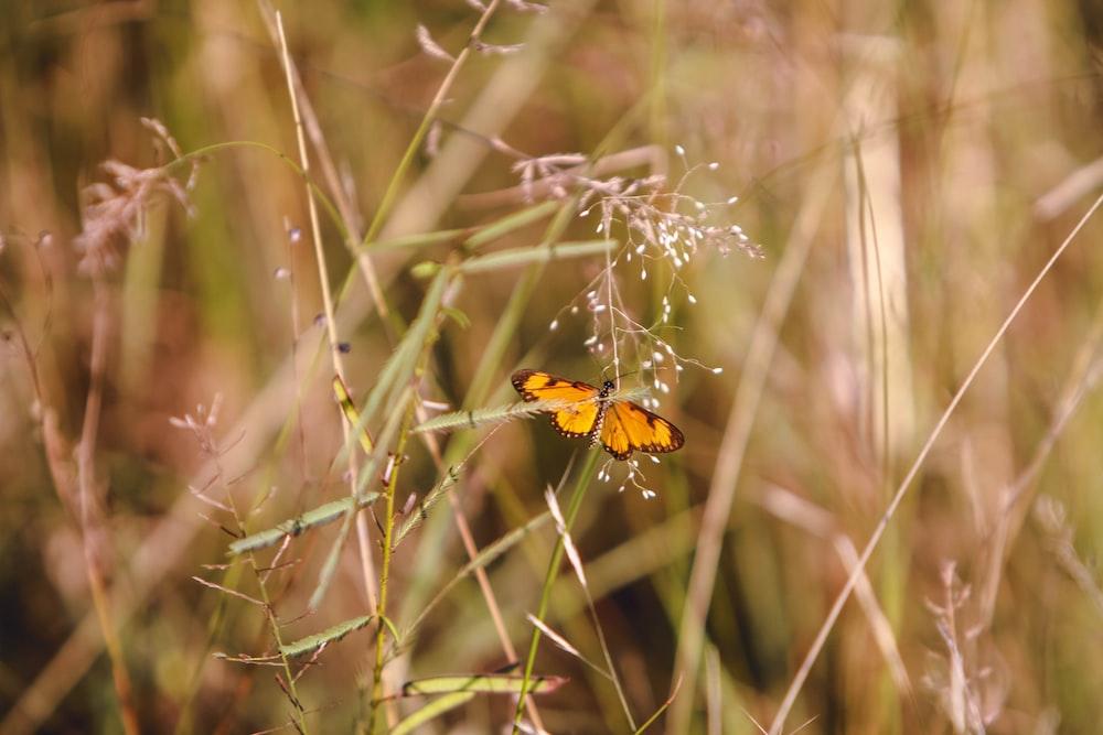 yellow butterfly on green grass