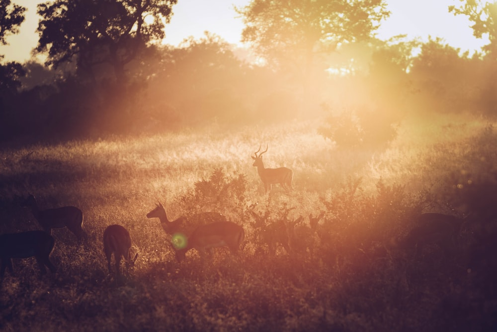 group of reindeer in grass field during sunrise