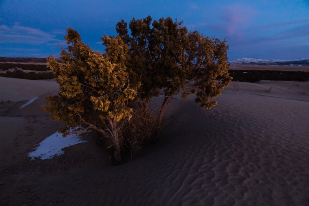 photo of tree on sand