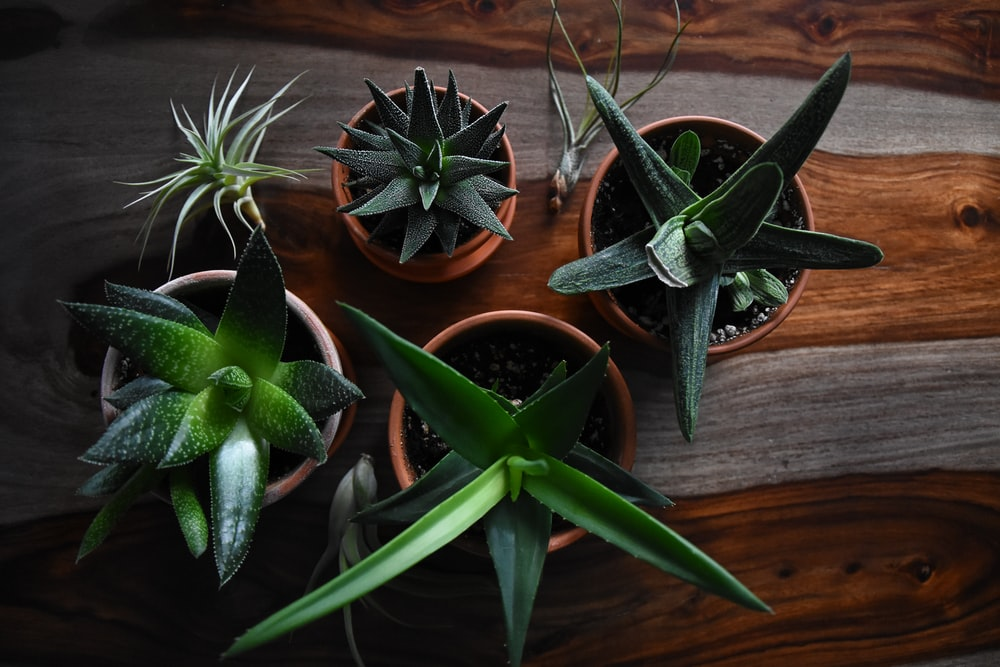 five potted succulent plants on brown surface closeup photography