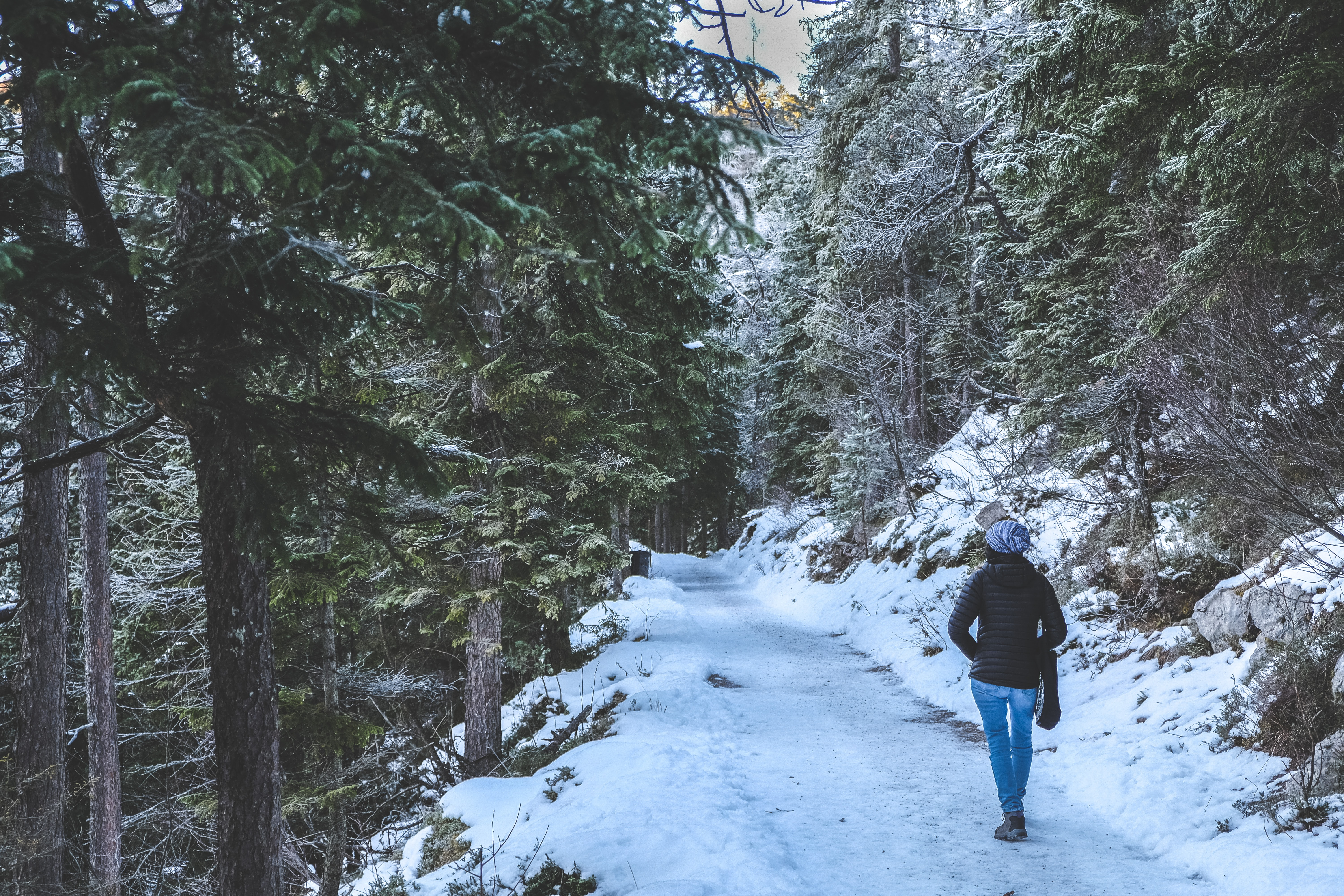 person walking on trail with snow between trees